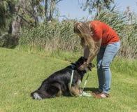 调整狗项圈的妇女 免版税库存照片