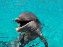 谈的海豚 图库摄影