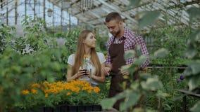 谈话与顾客和提建议的年轻快乐的人卖花人,当工作在园艺中心时 影视素材