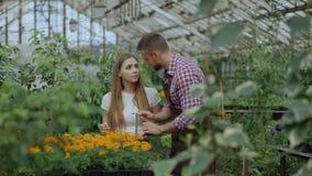 谈话与顾客和提建议的年轻快乐的人卖花人,当工作在园艺中心时 股票录像