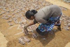 说谎下来烘干的鱼在斯里兰卡 免版税库存图片