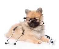 说谎与一个玻璃和听诊器的滑稽的波美丝毛狗小狗在他的脖子 查出在白色 免版税库存图片