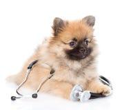 说谎与在他的脖子的一个听诊器的波美丝毛狗小狗 查出在白色 免版税库存照片