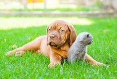 说谎与在绿草的一只小猫的红葡萄酒小狗 免版税库存照片