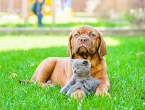 说谎与在绿草的一只小猫的红葡萄酒小狗 图库摄影