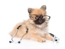 说谎与玻璃和听诊器的波美丝毛狗小狗在他的脖子 查出在白色 免版税库存图片