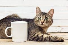 说谎在一个加奶咖啡杯子旁边的幼小猫 库存照片
