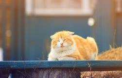 说谎在一条长凳的愉快的橙色猫在一晴朗的sprin的庭院里 库存图片