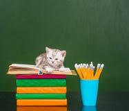 说谎在书的小猫临近空的绿色黑板 免版税库存图片