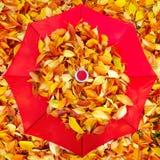 说谎在伞附近的明亮,五颜六色的叶子在秋天公园 免版税库存图片