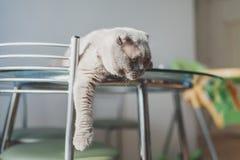 说谎在厨房用桌上的懒惰猫 免版税库存照片