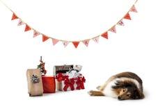 说谎在圣诞节礼物旁边的狗 库存图片