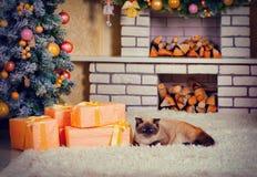 说谎在地毯的猫在圣诞节的前夕 免版税库存图片