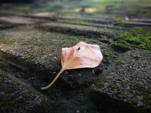 说谎在地面上的下落的叶子 免版税库存图片