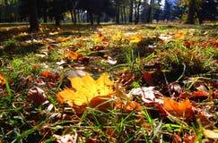 说谎在地面上的下落的黄色叶子 库存照片