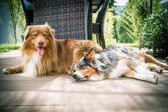 说谎在地面上的两条狗 免版税图库摄影