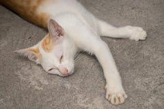 说谎在地面上的幼小猫 库存照片