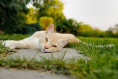 说谎在地面上的逗人喜爱的猫 库存照片