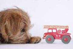 说谎在小孩子的玩具旁边的小狗 图库摄影