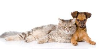 说谎在小狗附近的猫 背景查出的白色 免版税图库摄影