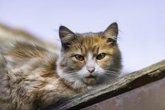 说谎在屋顶的猫看下来 库存照片