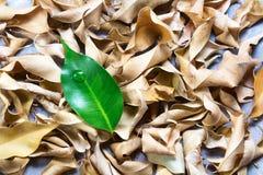说谎在干燥叶子中的绿色植物 对比概念 图库摄影