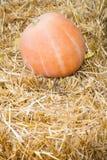 说谎在干草堆的南瓜 免版税库存照片