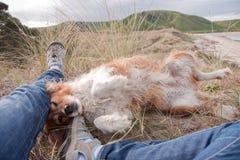 说谎在所有者的腿旁边的红色大牧羊犬狗在海滩 免版税库存照片