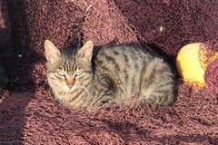 说谎在捕鱼网的逗人喜爱的小猫 图库摄影