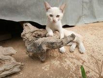 说谎在日志的小猫 免版税图库摄影