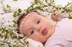 说谎在春天开花李子花的婴孩 库存图片