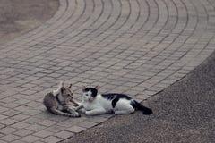 说谎在曲线瓦片的两只逗人喜爱的猫在公园 免版税库存照片