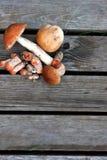 说谎在木背景的小组蘑菇 库存照片
