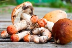 说谎在木背景的小组蘑菇 库存图片