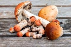 说谎在木背景的小组蘑菇 免版税库存照片