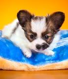 说谎在枕头的小狗 免版税库存图片