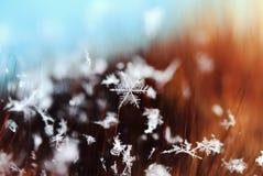 说谎在毛皮头发的美丽的雪花 免版税图库摄影