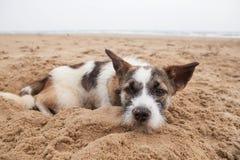 说谎在沙子海滩的无家可归的狗的哀痛面孔以偏僻的感受 库存照片