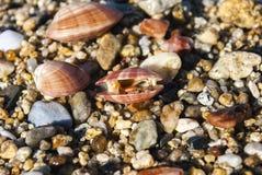 说谎在沙子的三壳 免版税库存图片