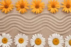 说谎在沙子的沙子和花美好的之字形  图库摄影