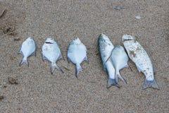 说谎在沙子的被抓的鱼 图库摄影