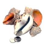 说谎在海壳的硬币 免版税图库摄影