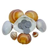 说谎在海壳的硬币 免版税库存照片