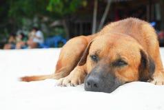 说谎在海岸的狗 免版税库存图片