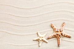 说谎在海沙的海星和棕榈叶 有标签的一个地方 免版税库存图片
