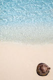 说谎在海滩的椰子 免版税库存图片