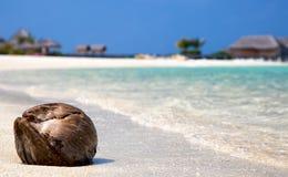 说谎在海滩的椰子 库存照片