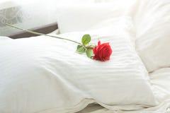 说谎在白色枕头的红色玫瑰特写镜头射击在床 免版税库存照片