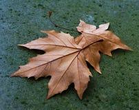 说谎在石路面的秋叶 免版税库存图片