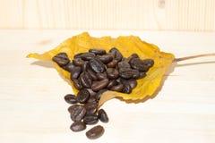 说谎在秋天叶子的咖啡豆 库存照片